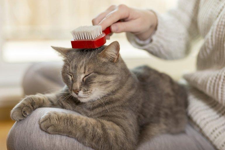 Fellpflege bei Katzen – für schönes und gesundes Fell