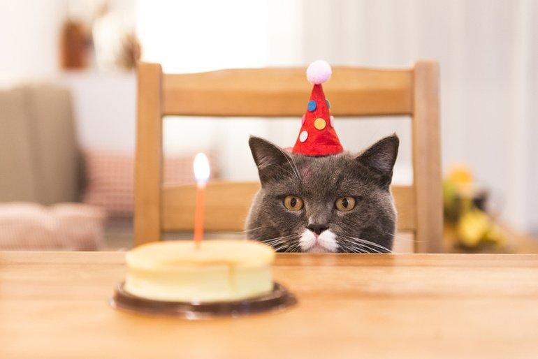 Happy Birthday, Katze.net