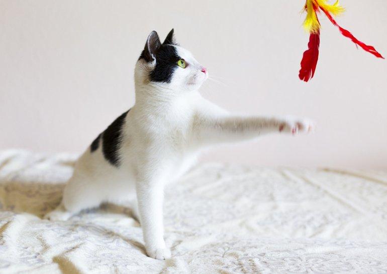 Katzenspielzeug – Abwechslung und Beschäftigung für ein glückliches Katzenleben