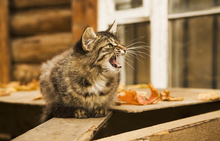 Was will die Katze sagen? Katzensprache richtig deuten