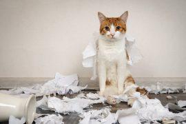 Verhaltensprobleme Katze