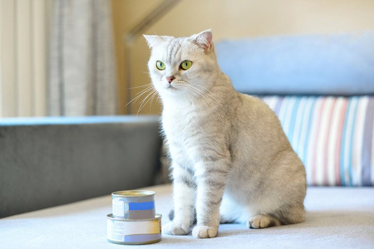 Wie Katzenhalter hochwertiges Katzenfutter erkennen