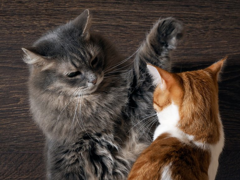 Katzenmobbing – Mobbing unter Katzen