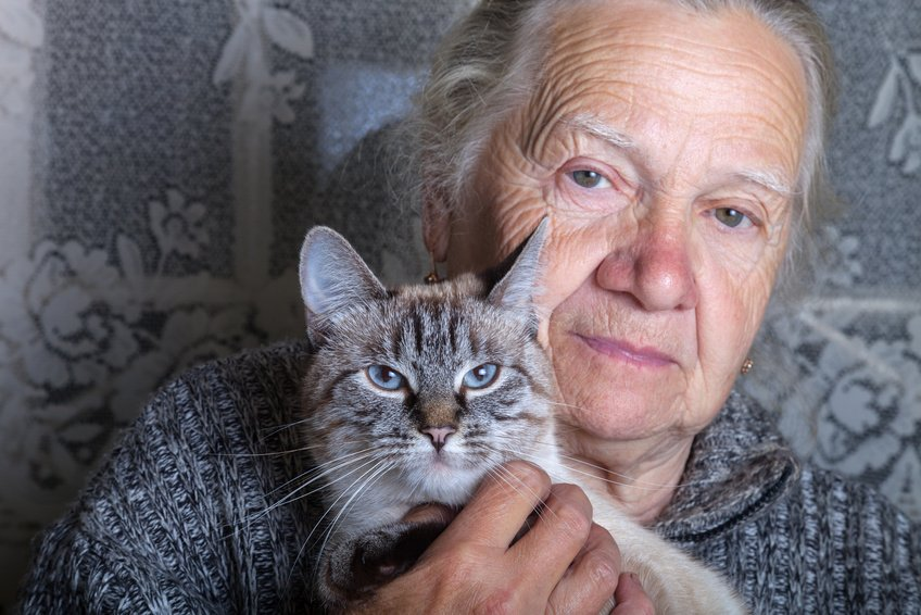 Katzenalter: Wie alt werden Katzen